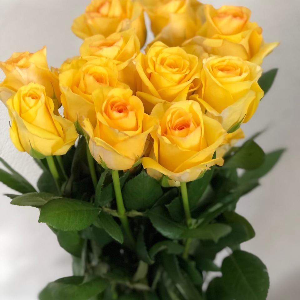 rosa amarela de javu