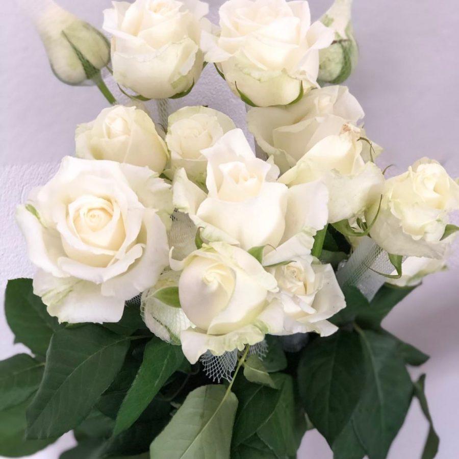 rosa branca boing